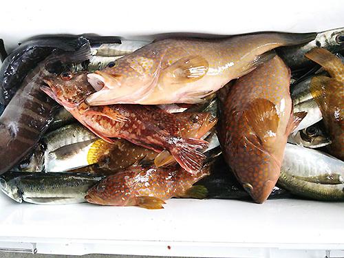 160629_fish.jpg